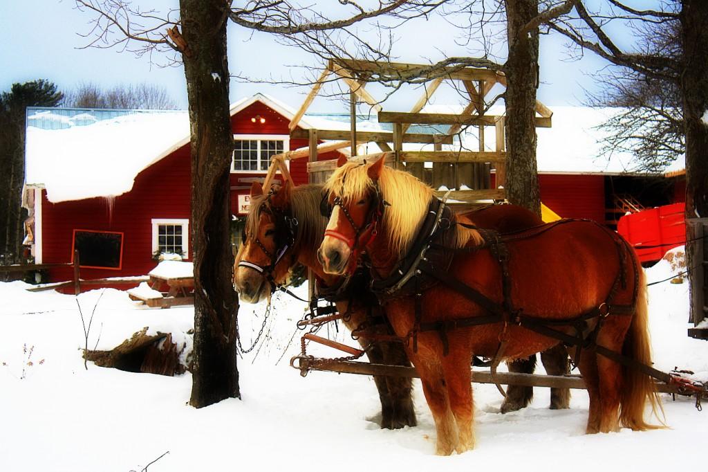 sleigh ride 1